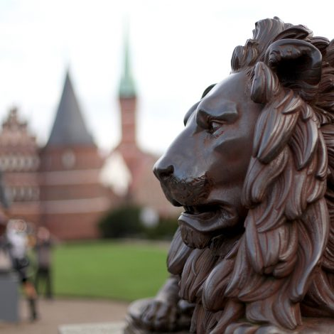 lion-842015_1920-e1548936815534.jpg